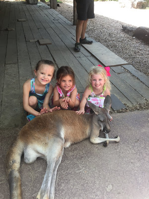 20 Summer Bucket List Activities - Your Guide to Summer Fun. Family fun activities to do in and around Huntsville and the North Alabama area. Nashville zoo kangaroo encounter. Go to the zoo