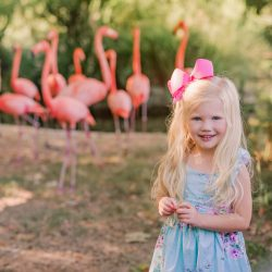 Audrey's Flamingo Photo Shoot