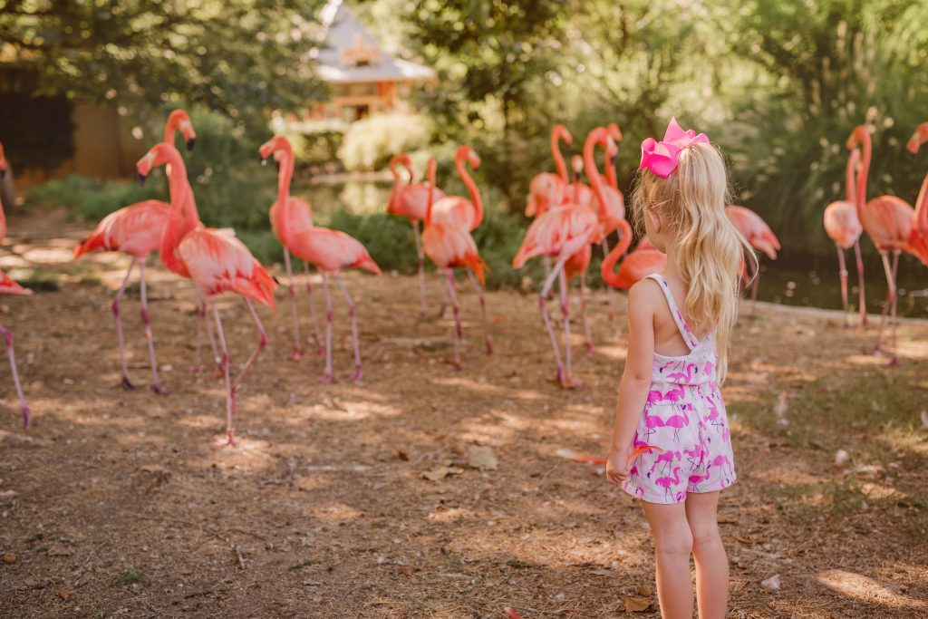 Flamingo photo shoot. Flamingo encounter photo shoot. Flamingo photos. Flamingo birthday photo shoot